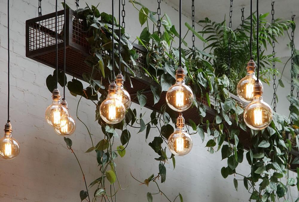Tala's Lights at Hackney Coffee Company