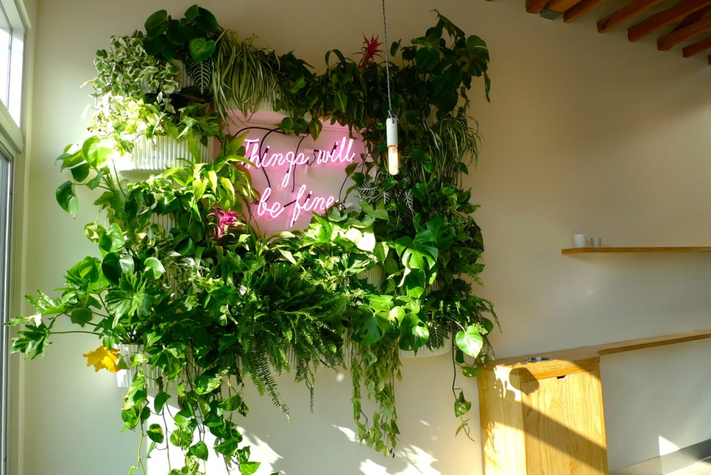 Floral Installation of hanging plants and neon light fixtures by Hello Gem at Dinosaur Coffee in Los Angeles, CA