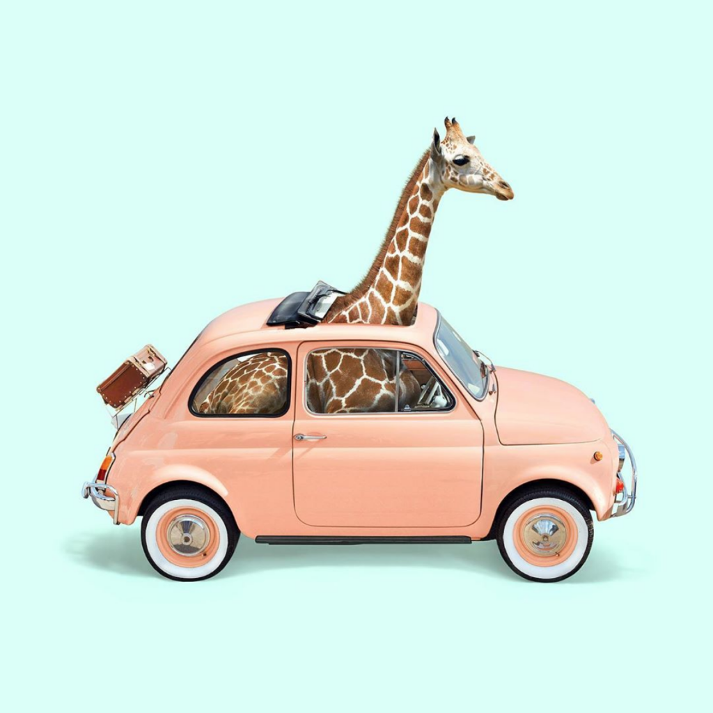 """Giraffe in a mini-car"" by Paul Fuentes located in London, UK as seen on Wescover/"