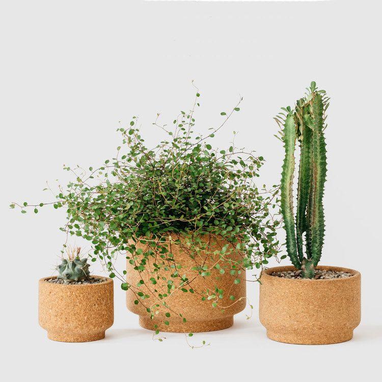 cork vases & vessels